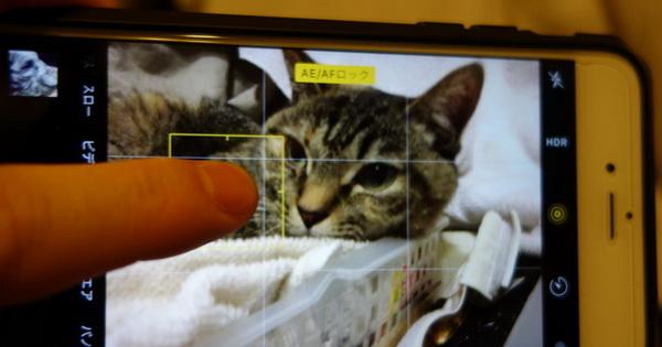 スマホカメラで、ピントが合わない時にとる、たった一つのアクション